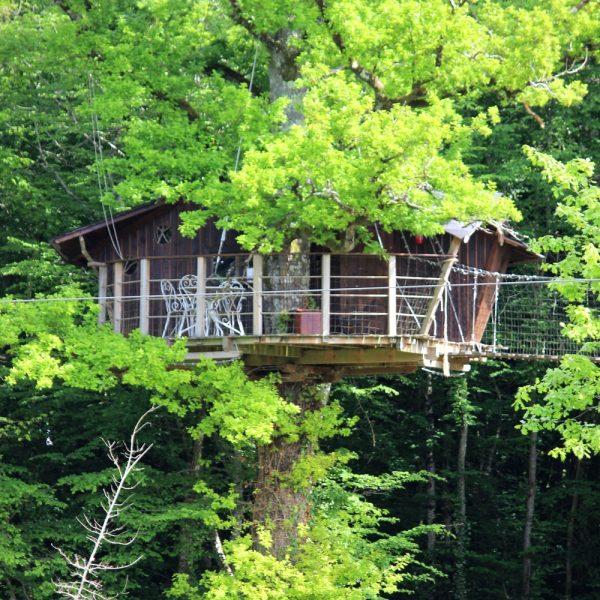 Une cabane dans un arbre dans la Vienne