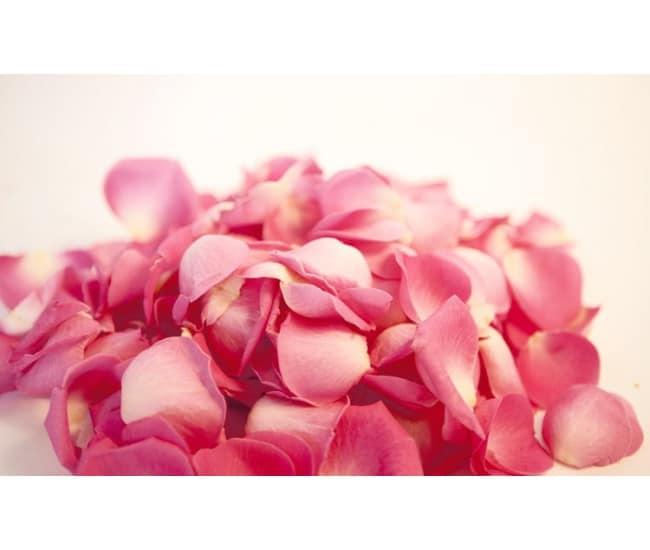 800-petales-de-roses